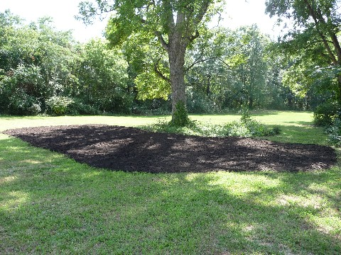 Mulching Pecans with Compost Watkinsville 014 Medium Web view.jpg
